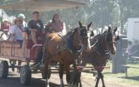 Horse drawn wagon