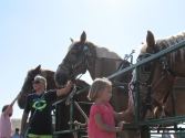pv2013-220-img_1416_public_@_horse_stalls