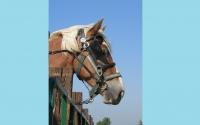 pv2013-220-img_1419_horse_head_@_stall