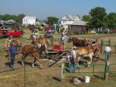 pv2013-200-img_1467_6_horses_threshing