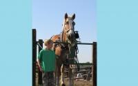 pv2013-220-img_1360_feeding_horses