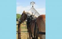 pv2013-220-img_1372_horse_shot