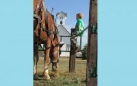 pv2013-220-img_1377_anders_schaefer_feeding_belgian_horses